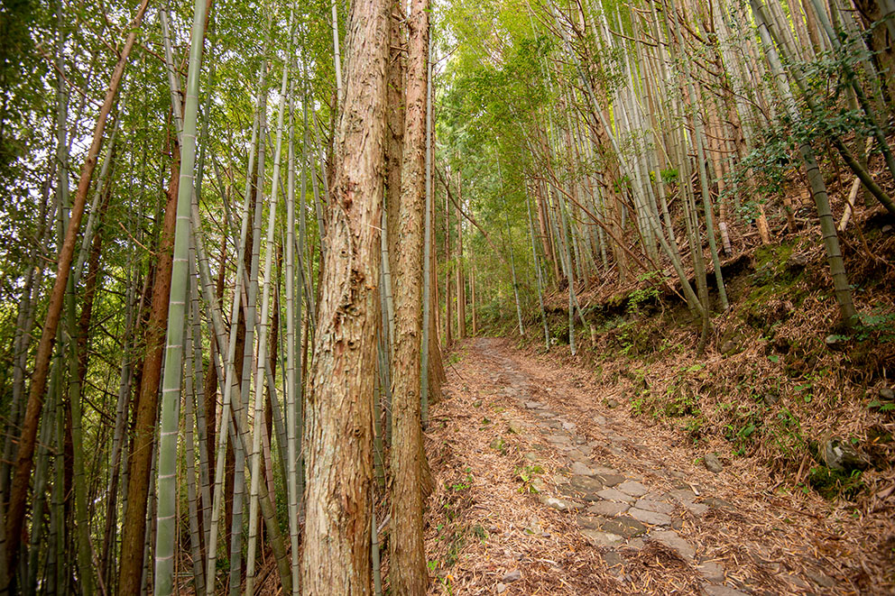 Kumano Kodo trail near lodging