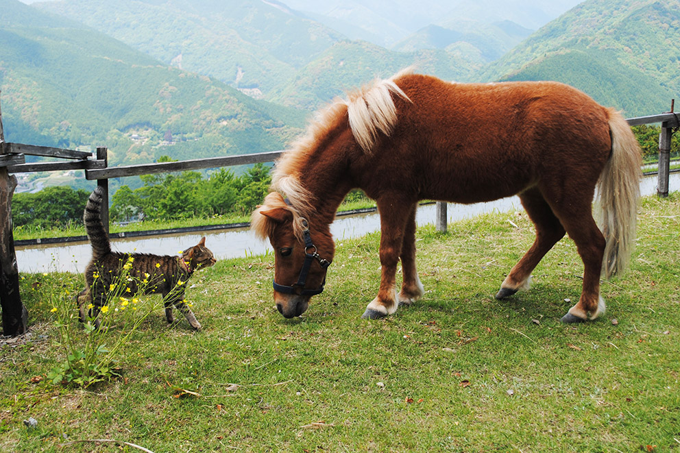 Cat meets pony